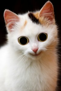 cat freaky wide eyed