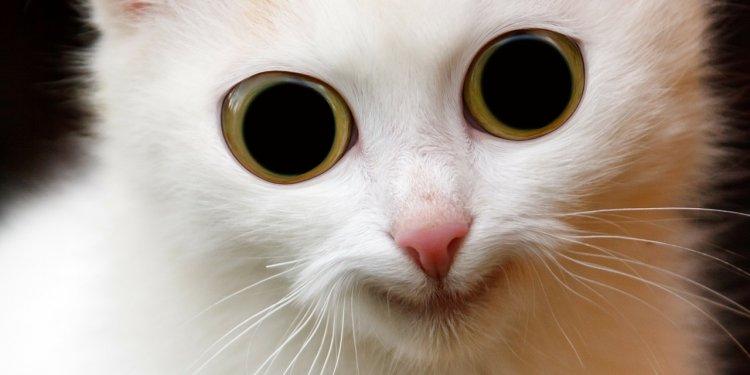 cat freaky wide eyed Image: Public Domain, Pixabay