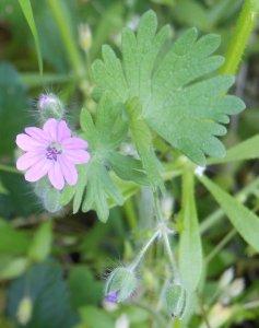 flower- (1)
