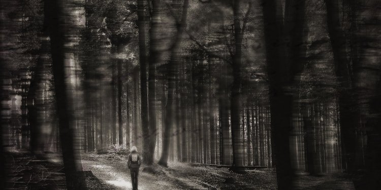 forest gloomy alone person