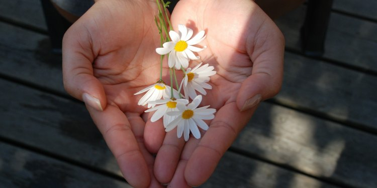 Giving Hands Share Flowers - Image: Public Domain, Pixabay