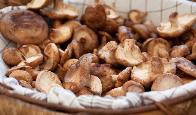 Mushrooms Food - Image: Public Domain, Pixabay