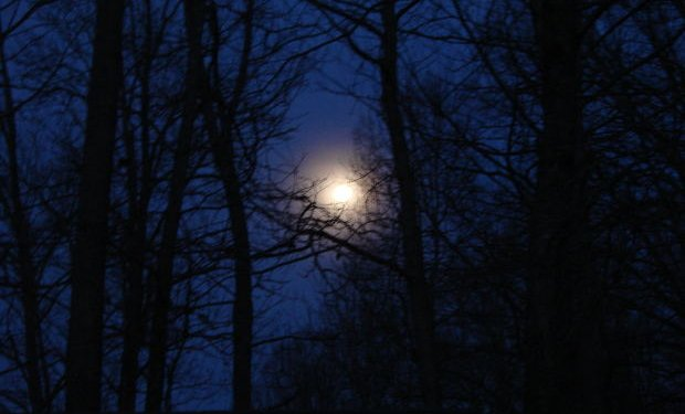 Night Sky Moon Trees