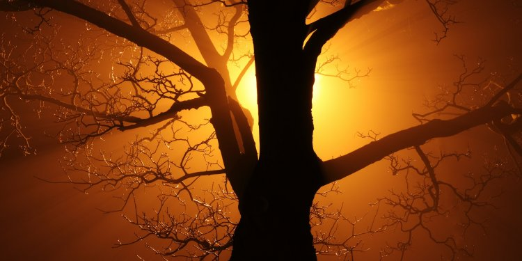 Random Tree Light Sun - Image: Public Domain, Pixabay