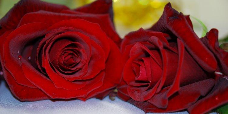 Rose Red Flower - Image: Public Domain, Pixabay