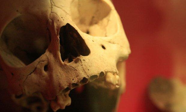 Skull Skeleton Dead