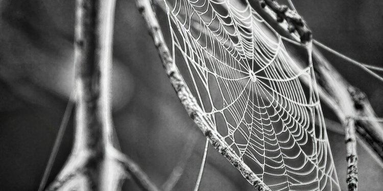 spider web Image: Public Domain, Pixabay