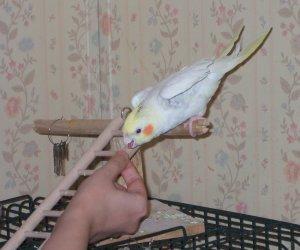 stoli-leaning bird