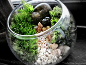 Image: Bowl terrarium by Doodle Bird Imaginariums