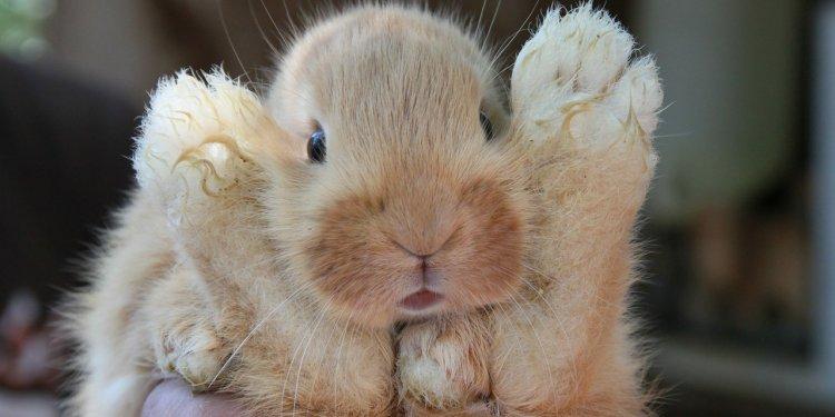 Cute Bunny Rabbit Animal - Image: Public Domain, Pixabay