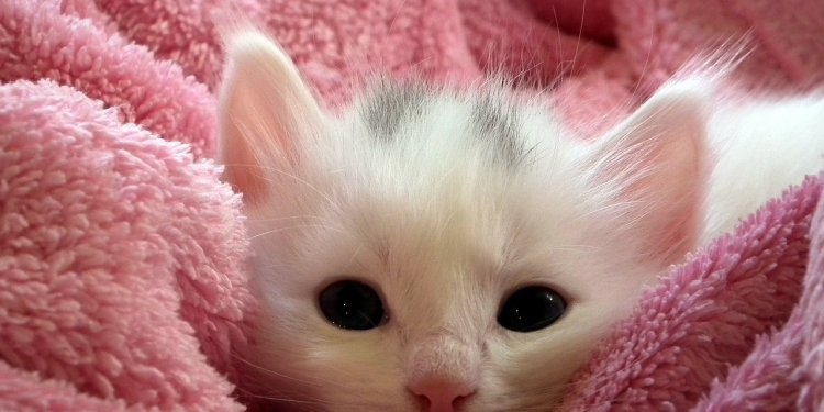 Cute Kitten Cat Animal