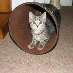 Cute Kitten Cat Animal - Image: Public Domain, Pixabay