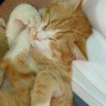 Cute Yellow Cat - Image: Public Domain, Pixabay