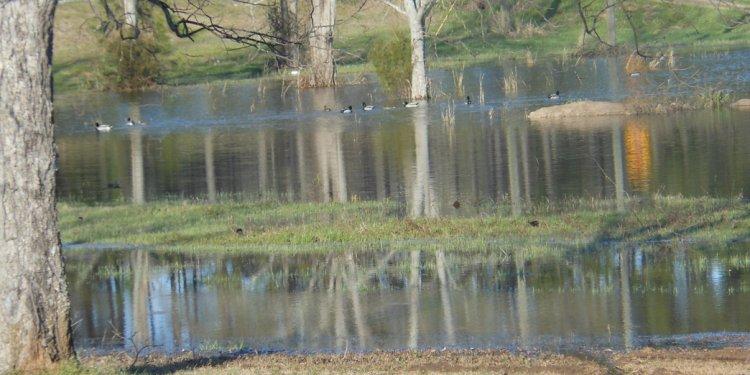 Flooded Yard With Ducks