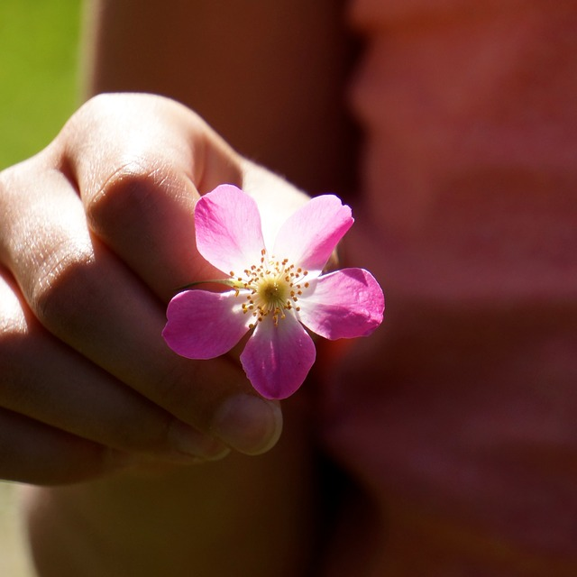 Pink Flower Hand Give - Image: Public Domain, Pixabay