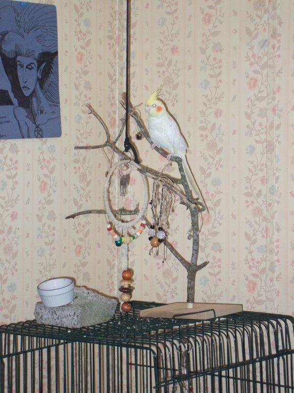 Cockatiel Bird Toy Tree - © Briana Blair