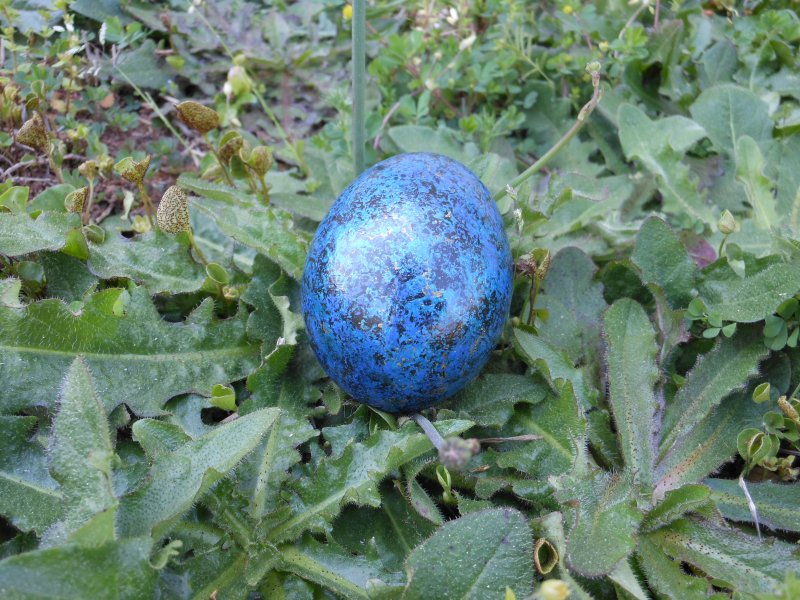 Spiritual Egg Blue magic - © Briana Blair