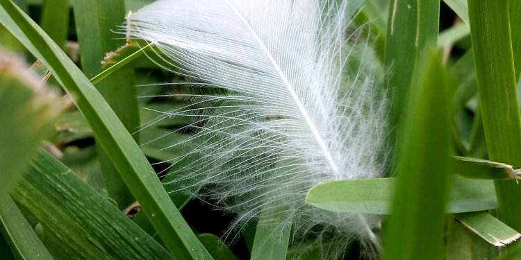 Feather Grass Nature White Green - Image: Public Domain, Pixabay