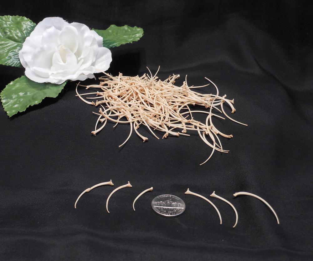 Rat Snake Rib Bones Skeleton Spine Crafting Spirituality Spells