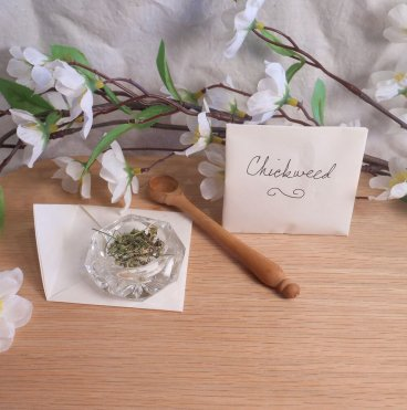 Dried chickweed herb spells ritual pagan wiccan magic