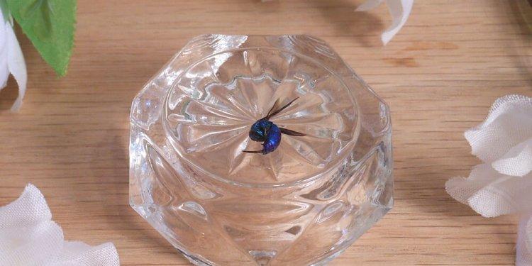 Jewel wasp Ampulex compressa Elements for Spells Rituals