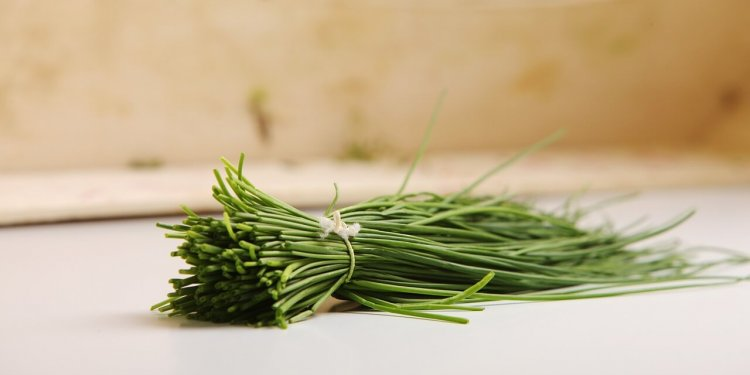 chives herb plant cooking magic