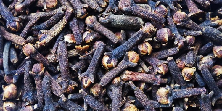cloves herb plant cooking magic