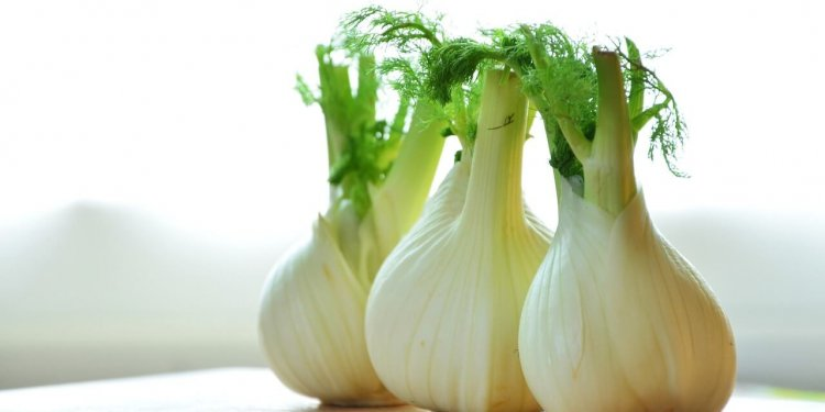 fennel herb plant cooking magic