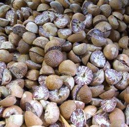 nutmeg herb plant cooking magic