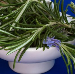 rosemary herb plant cooking magic