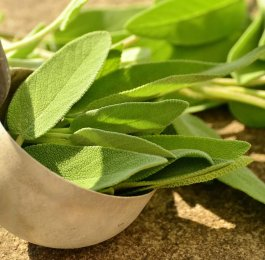 sage herb plant cooking magic