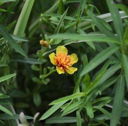 tarragon herb plant cooking magic