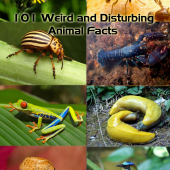 101 Weird And Disturbing Animal Facts
